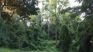 vine-forest-wayne-pa