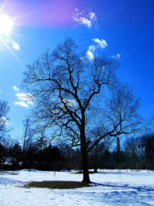 Photo by Stanley Zimny entitled 'Sunny Winter Tree' (Attribution-NonCommercial 2.0 Generic), link through photo
